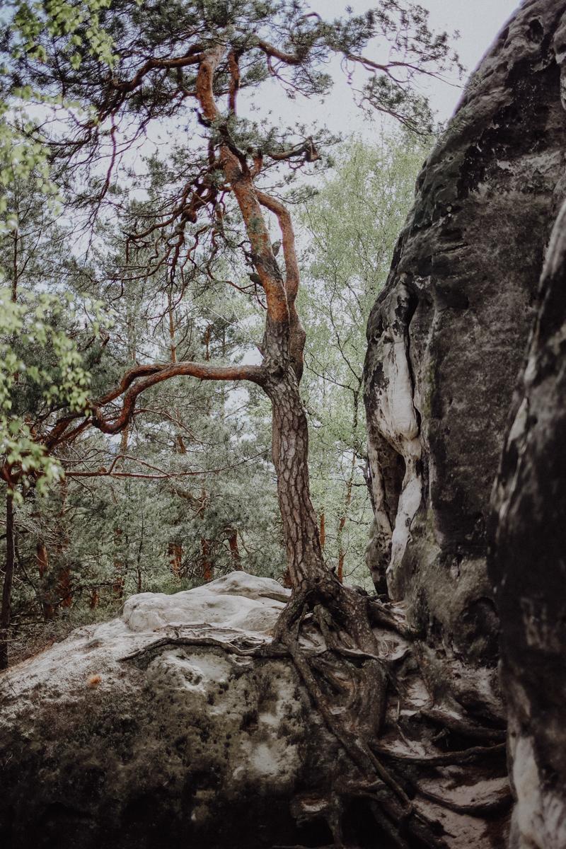 Wandern Bastei Sächsische Schweiz Gamrig