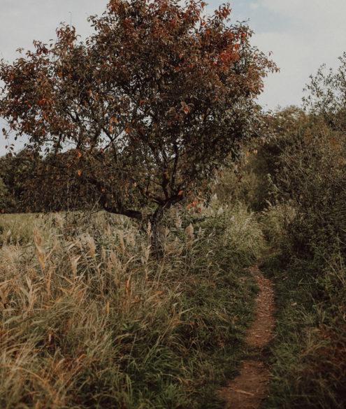 Wandern Warnowtal Sternberger Seenland