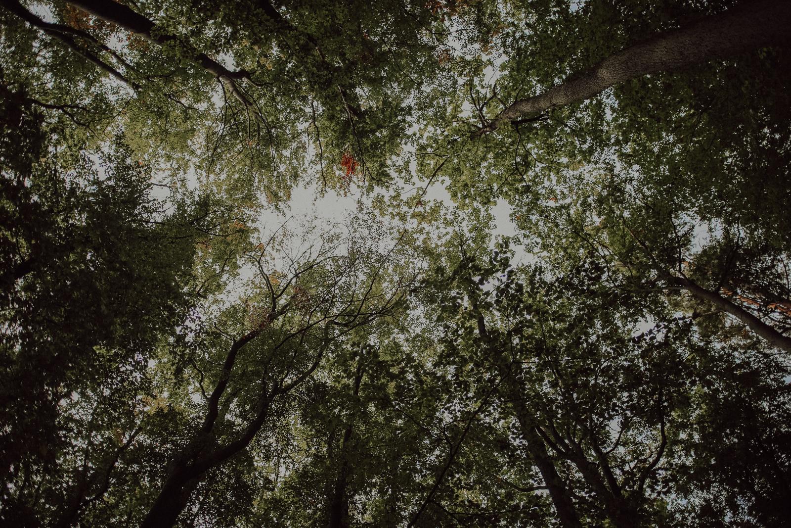 Im Reich der Schatten Buchenwälder absorbieren mit ihren dichten, fast lückenlosem Blätterdach fast sämtliches Licht. In ihren Schatten können also nur angepasste Tiere und Pflanzen leben. Trotzdem sind Buchenwälder der bevorzugte Lebensraum mehrerer tausend Arten. Dabei sind die Buchen - wäre da nicht der Raubbau gewesen - besonders durchsetzungsfähig. Sie gedeihen auf Kalkböden und mageren Sandflächen ebenso wie an feuchten Standorten, im Gebirge und im Tiefland.